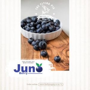 Juno Berry | Blueberry | The Flying Pig
